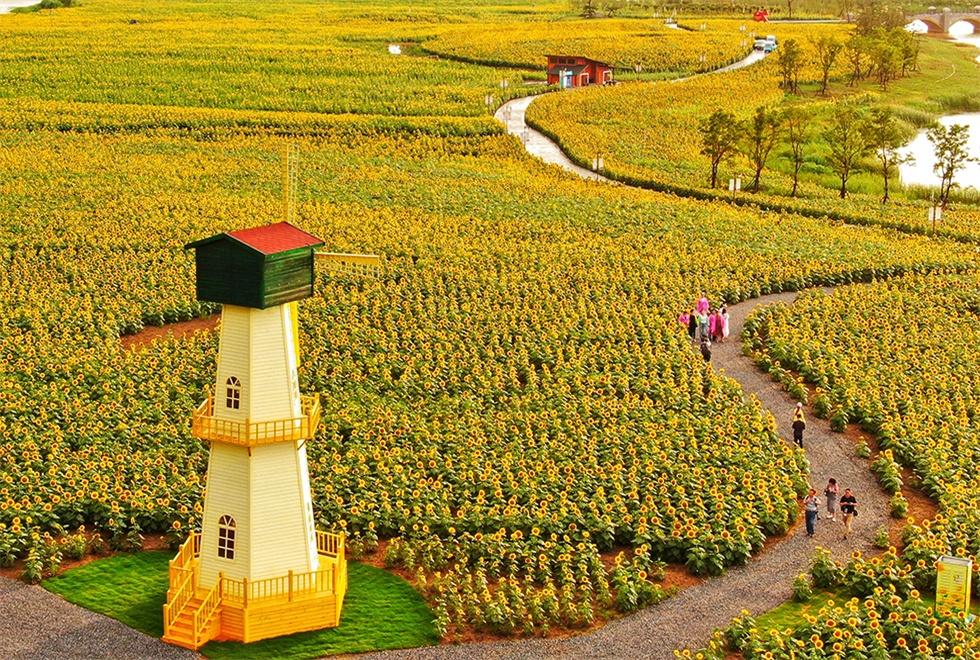 亚博网app下载白马湖·向日葵的故事